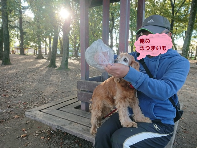 f:id:sumomomomoko:20181104214513j:plain