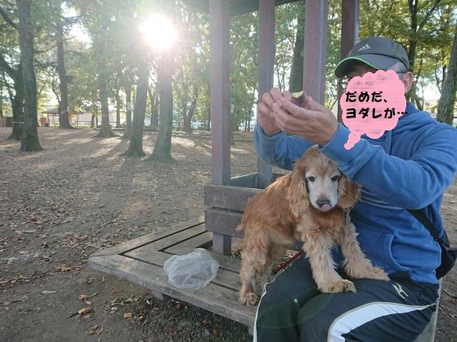 f:id:sumomomomoko:20181104214519j:plain
