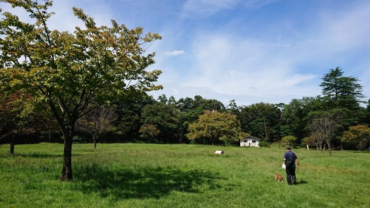 狭山公園の写真