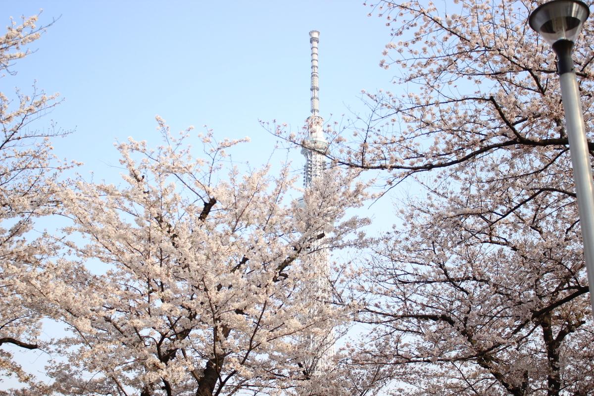 f:id:sumuji-maru:20190416233505j:plain