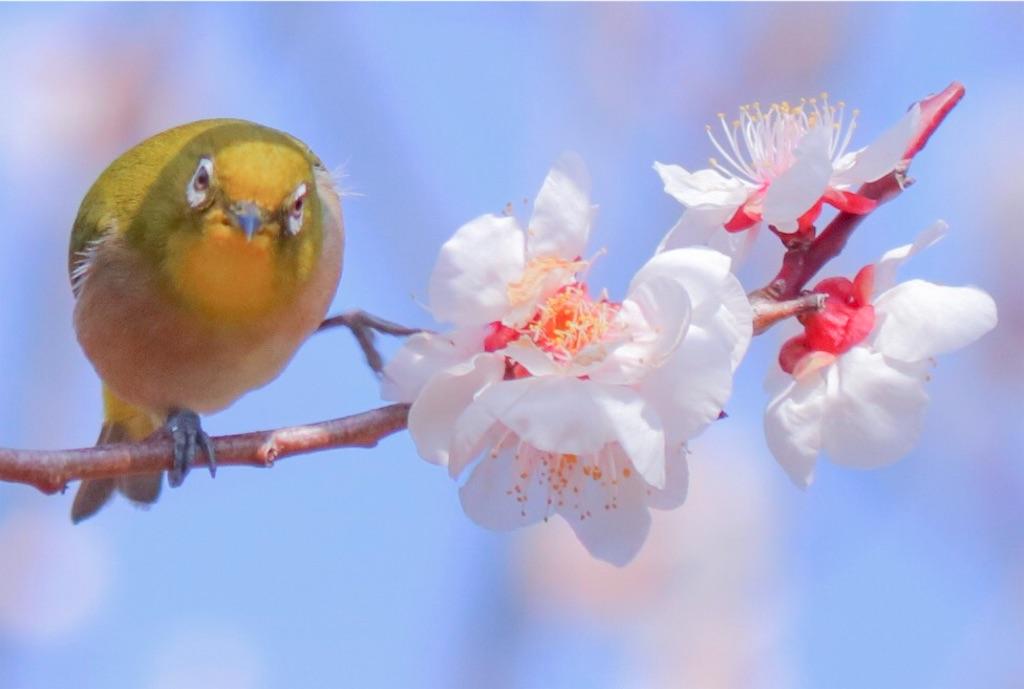 f:id:sun-flower8:20200307145841j:image
