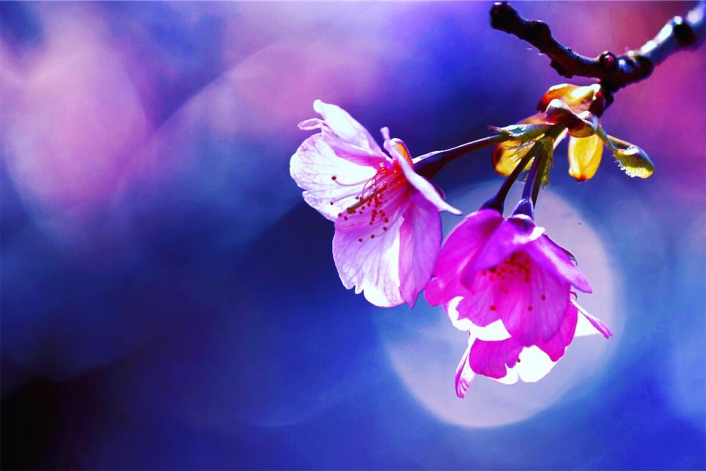 f:id:sun-flower8:20200308070358j:image