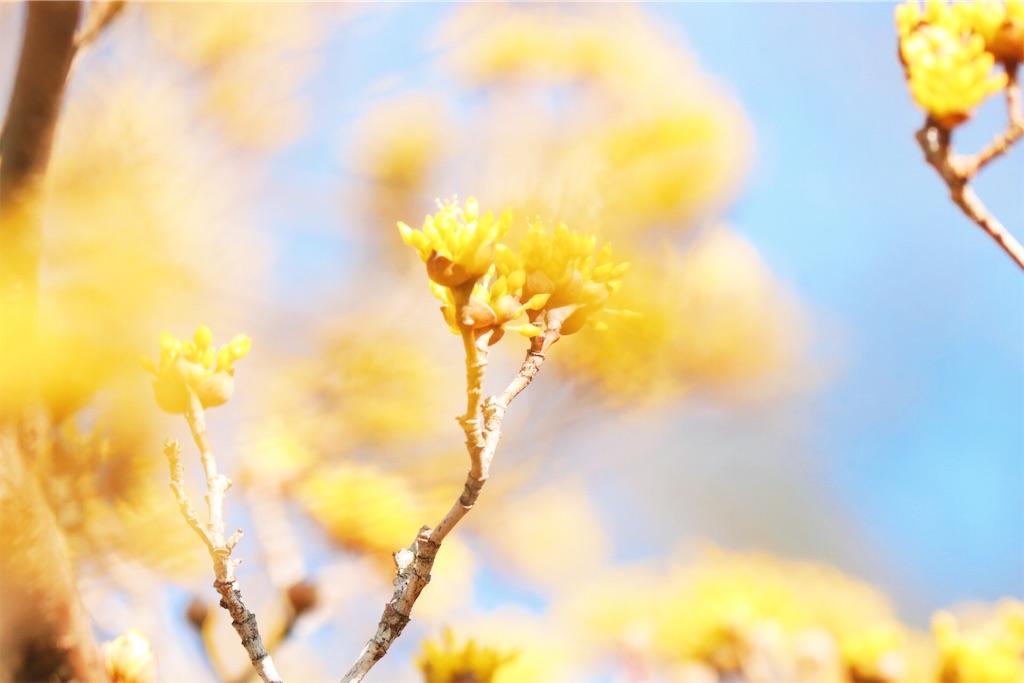 f:id:sun-flower8:20200309150744j:image