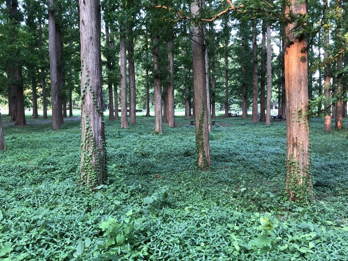 森林浴の写真