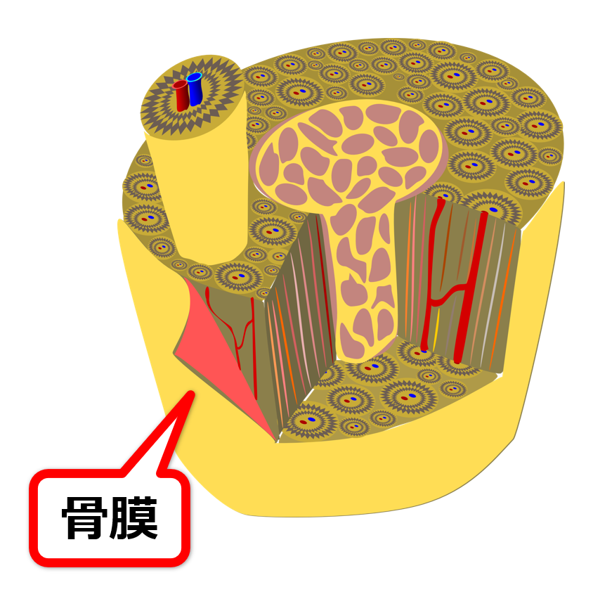 f:id:sunao-hiroba:20210306112206p:plain