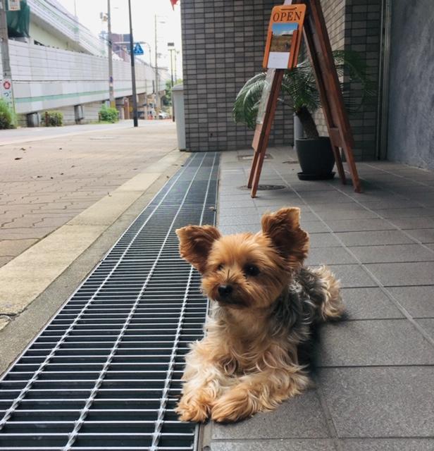 f:id:sunawachi_leather:20191008131516j:plain