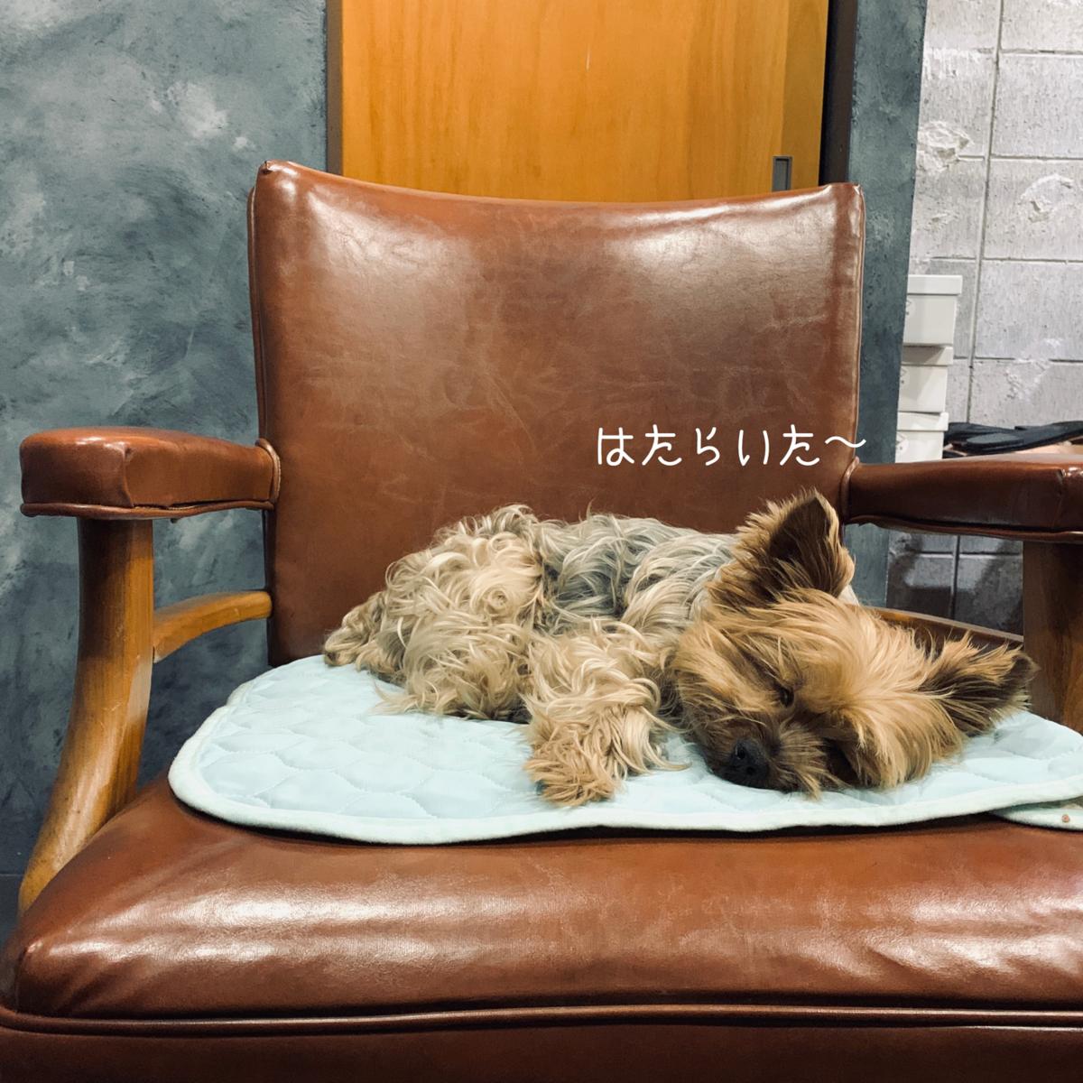 f:id:sunawachi_leather:20201227184641p:plain