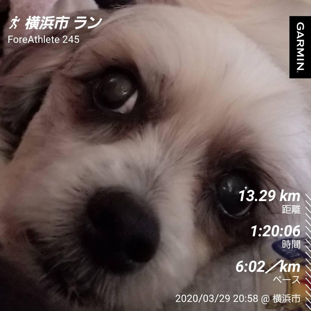 f:id:sunchan33:20200329235503j:plain