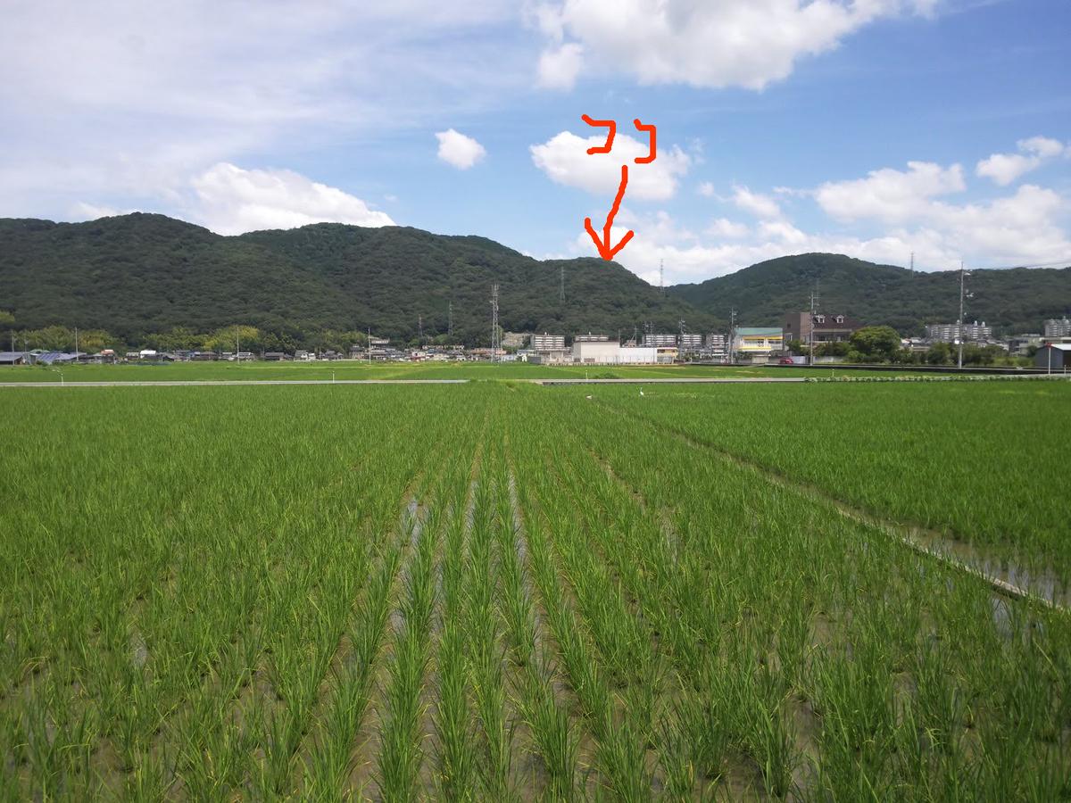 f:id:sunetsumuri:20210728132637j:plain