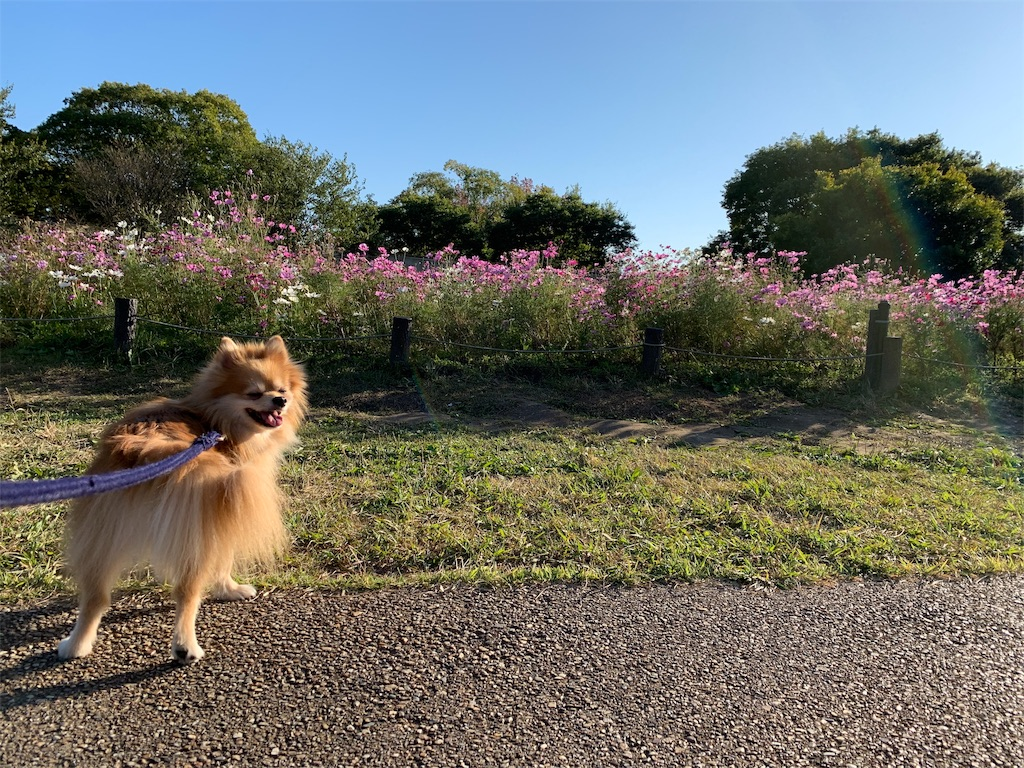 f:id:sunflower-chisama:20191108162027j:image
