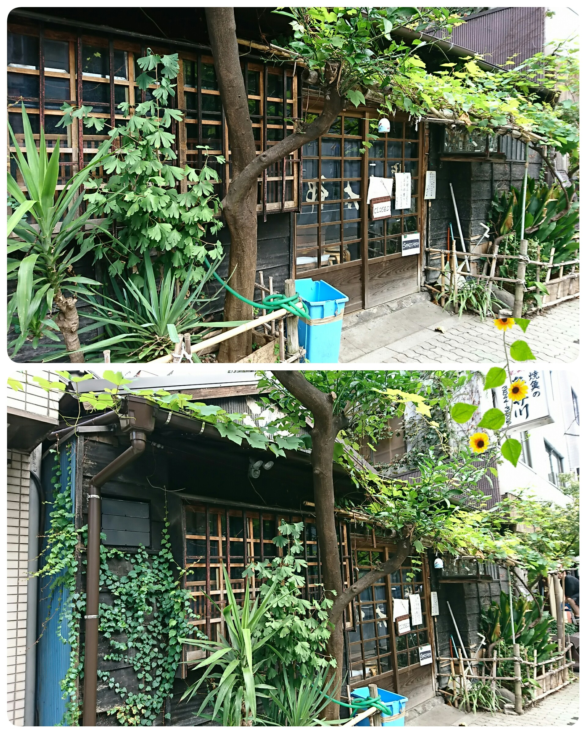 f:id:sunflower-shigeaki:20171007231037j:image