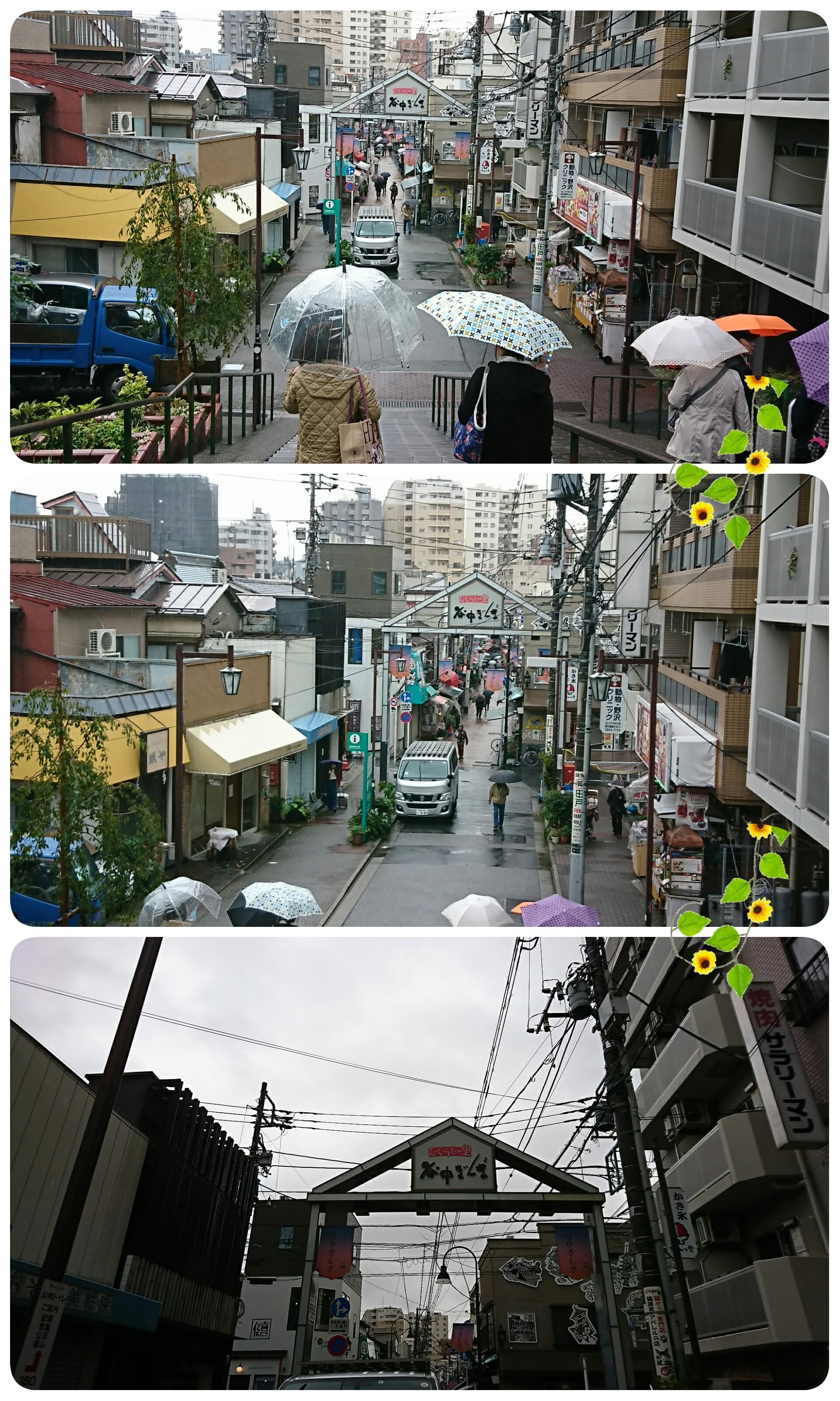 f:id:sunflower-shigeaki:20171020222924j:image