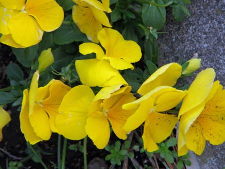 f:id:sunflower23:20130319191828j:image