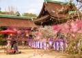 京都新聞写真コンテスト 梅苑で優雅に