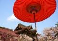 京都新聞写真コンテスト 梅苑で一休み