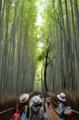 京都新聞写真コンテスト 三人旅