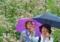 京都新聞写真コンテスト 姉妹と蝶々