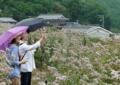 京都新聞写真コンテスト あっ! 蝶々見つけた!