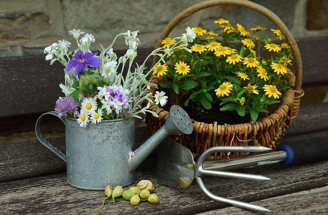 カラフルなお花でガーデニングを楽しむ