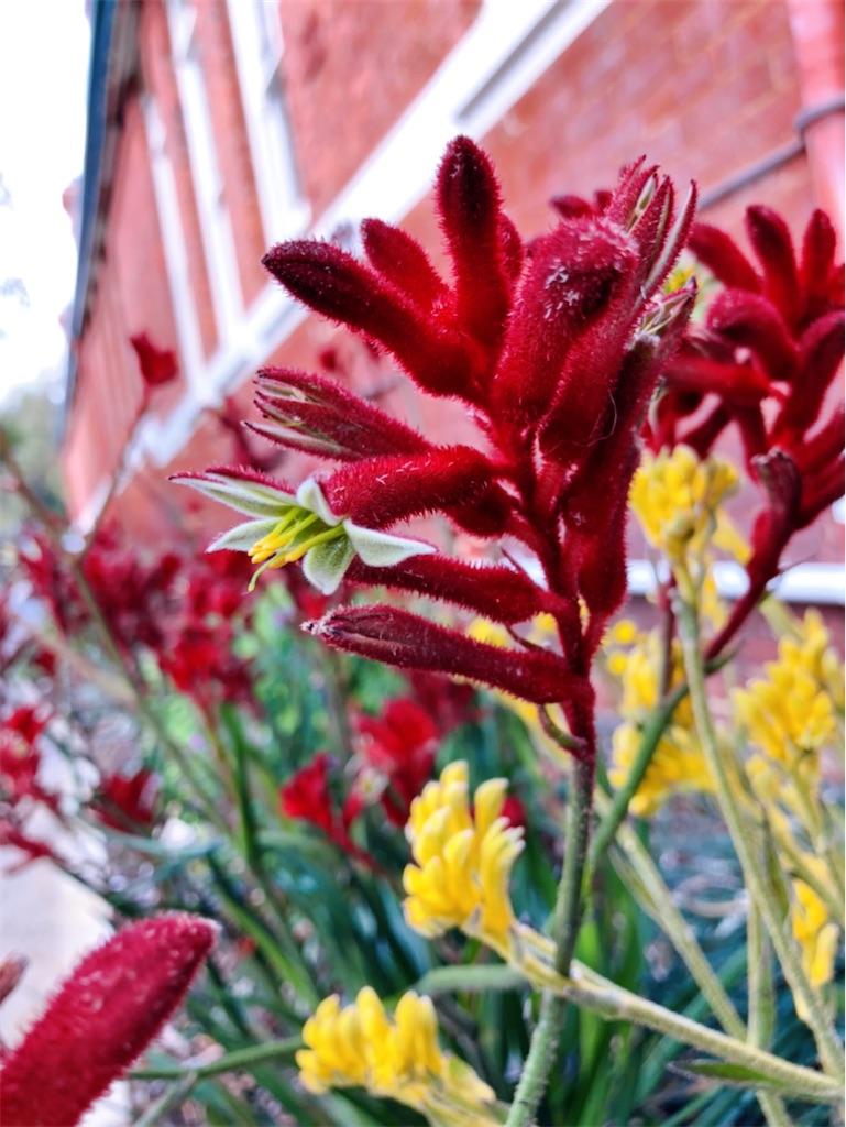 f:id:sunnyflowers:20210831175318j:image