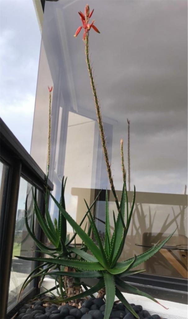 f:id:sunnyflowers:20211003170512j:image