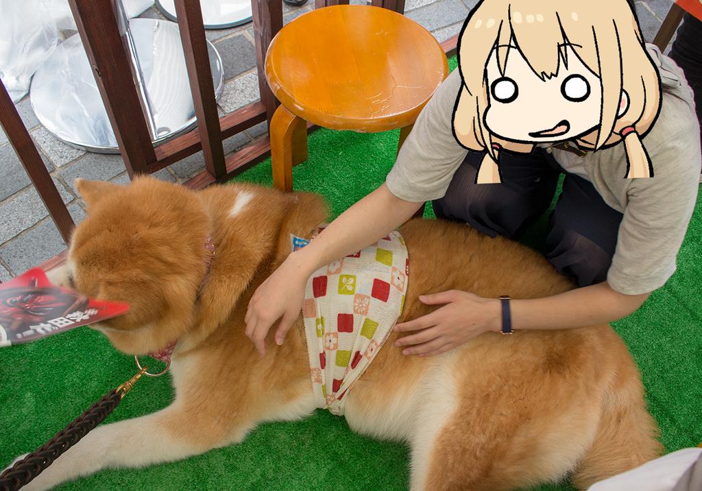 和犬には目が無い
