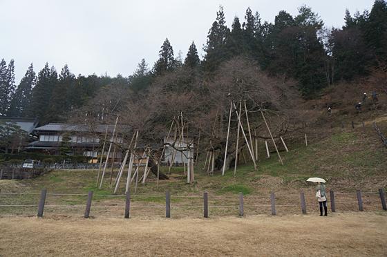 f:id:sunoho:20150721194541p:image