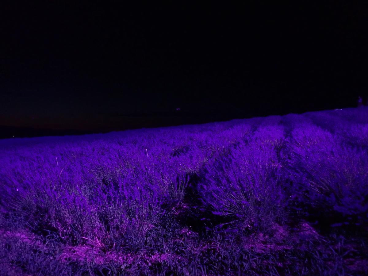f:id:sunrise181018:20210724150151j:plain