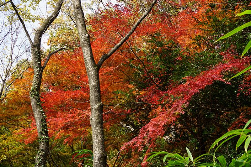 信夫山公園の紅葉