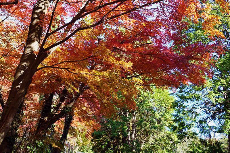 信夫山中腹の紅葉