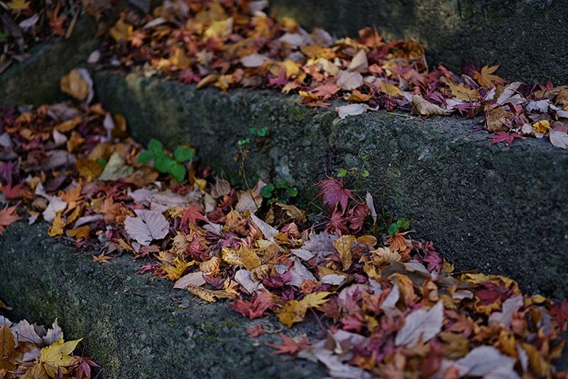 石段に落ち葉