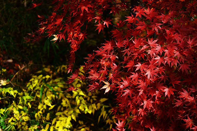 岩谷観音の紅葉