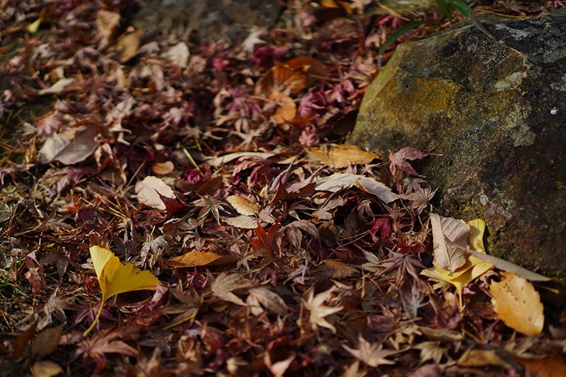 岩谷観音の落ち葉