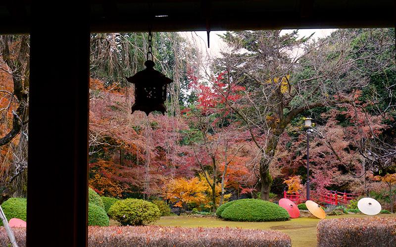喜多院の廊下から見た庭園と和傘