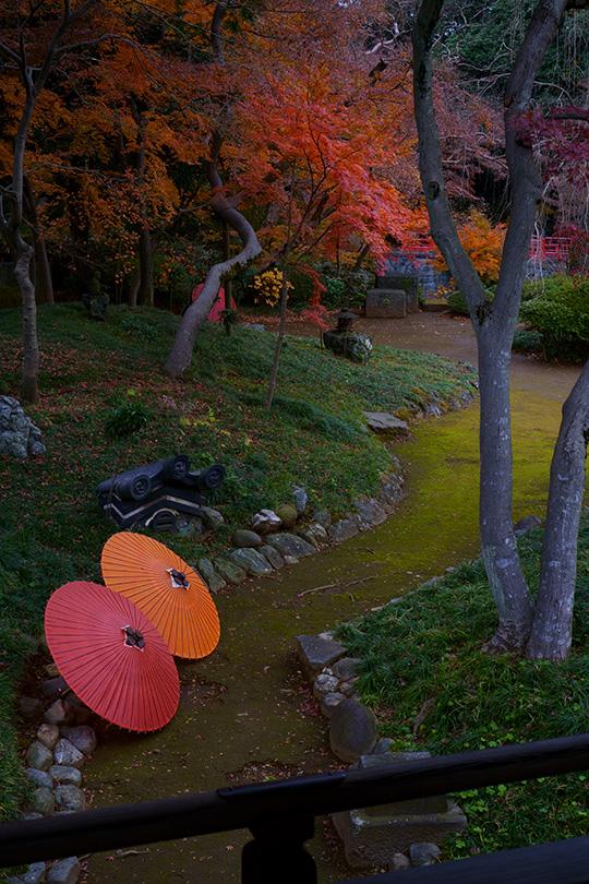和傘と紅葉の庭・喜多院にて