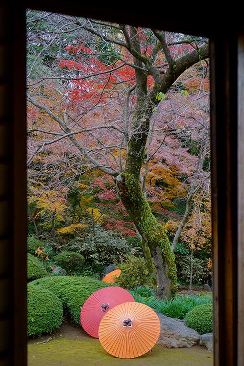 喜多院の書院から見た紅葉の庭