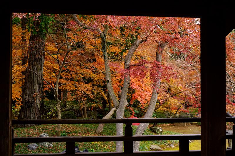 喜多院の廊下から見た紅葉