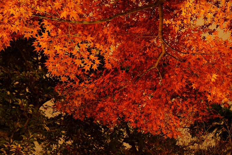 浅草寺裏手の紅葉