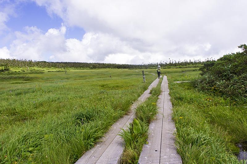 八幡平の高層湿原
