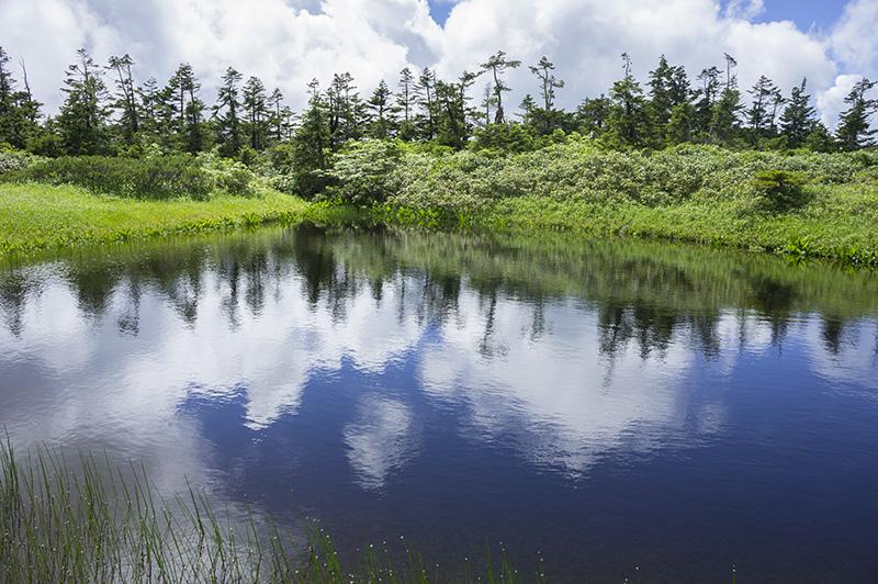 八幡平湿原の小さな沼