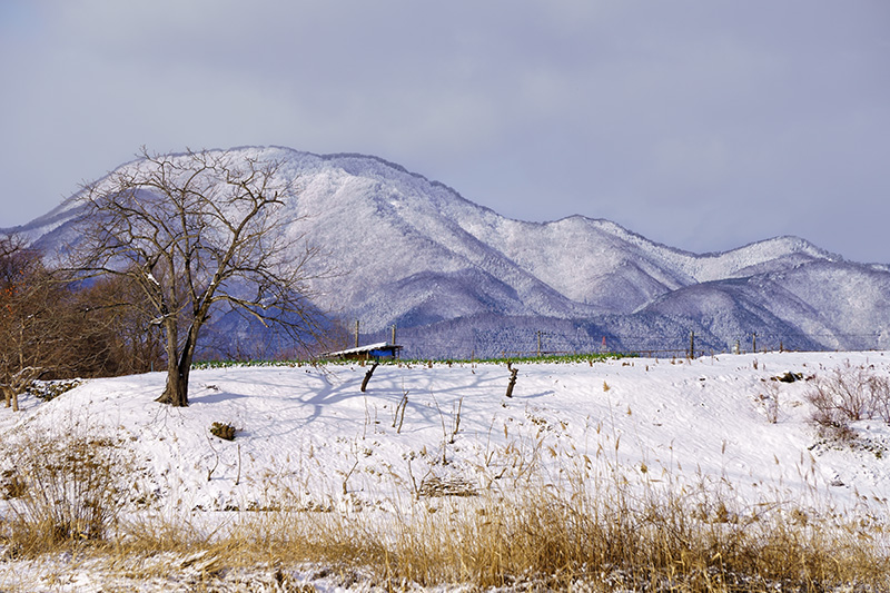 紫波町から見た東根山