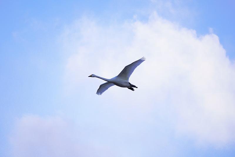 一羽で飛ぶ