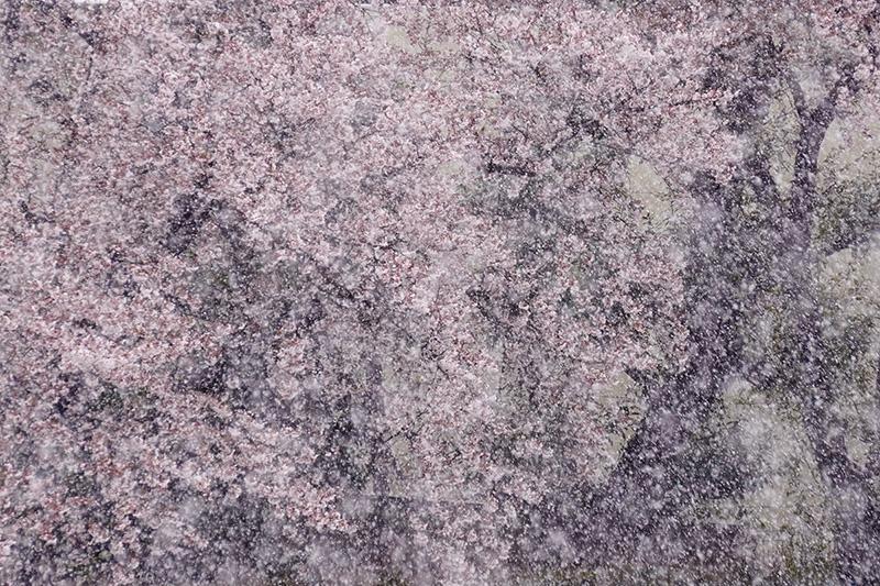 ベランダから雪見&花見