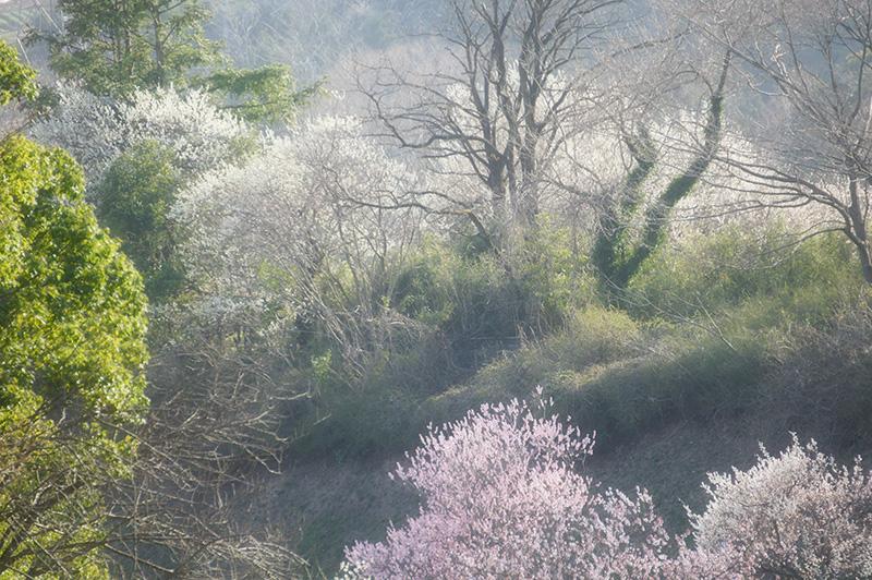 早春の山肌