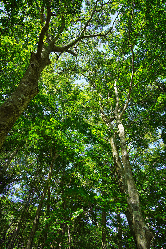 三頭山中央峰近くの木々