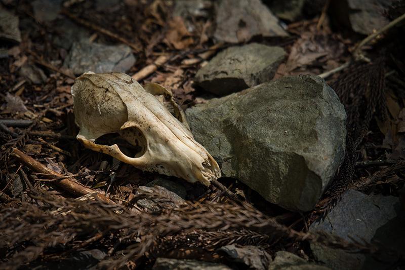 何かの頭骨