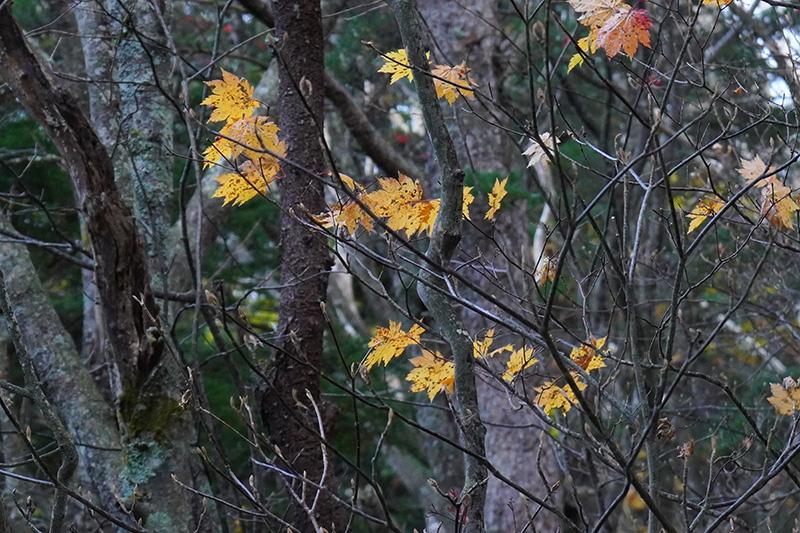 森は晩秋の装い