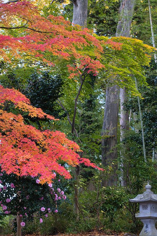 杉の林と紅葉