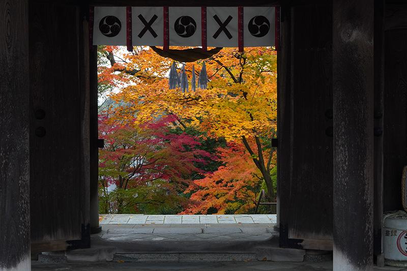 門の向こうに紅葉