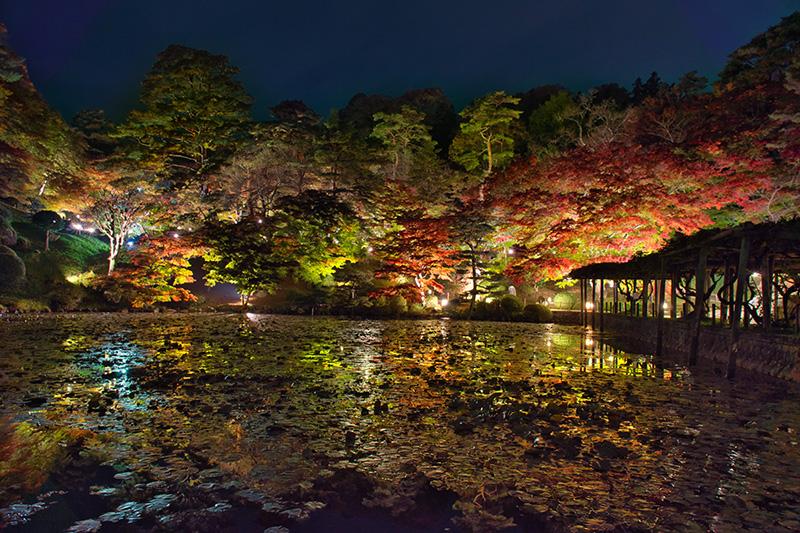 夜の霞ヶ池